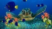 coral_reef_aquarium_screensaver-457477-.jpeg